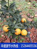山东菏泽丰盛源专业山地丘陵果树滴灌水肥一体化安装