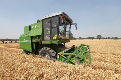奇瑞谷王小麦收割机驰骋在菏泽麦田间 高清图片