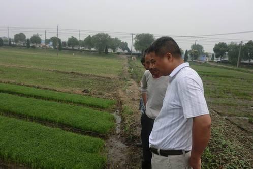 在隆盛庄镇,黑土台镇,元山子乡设面积3万亩